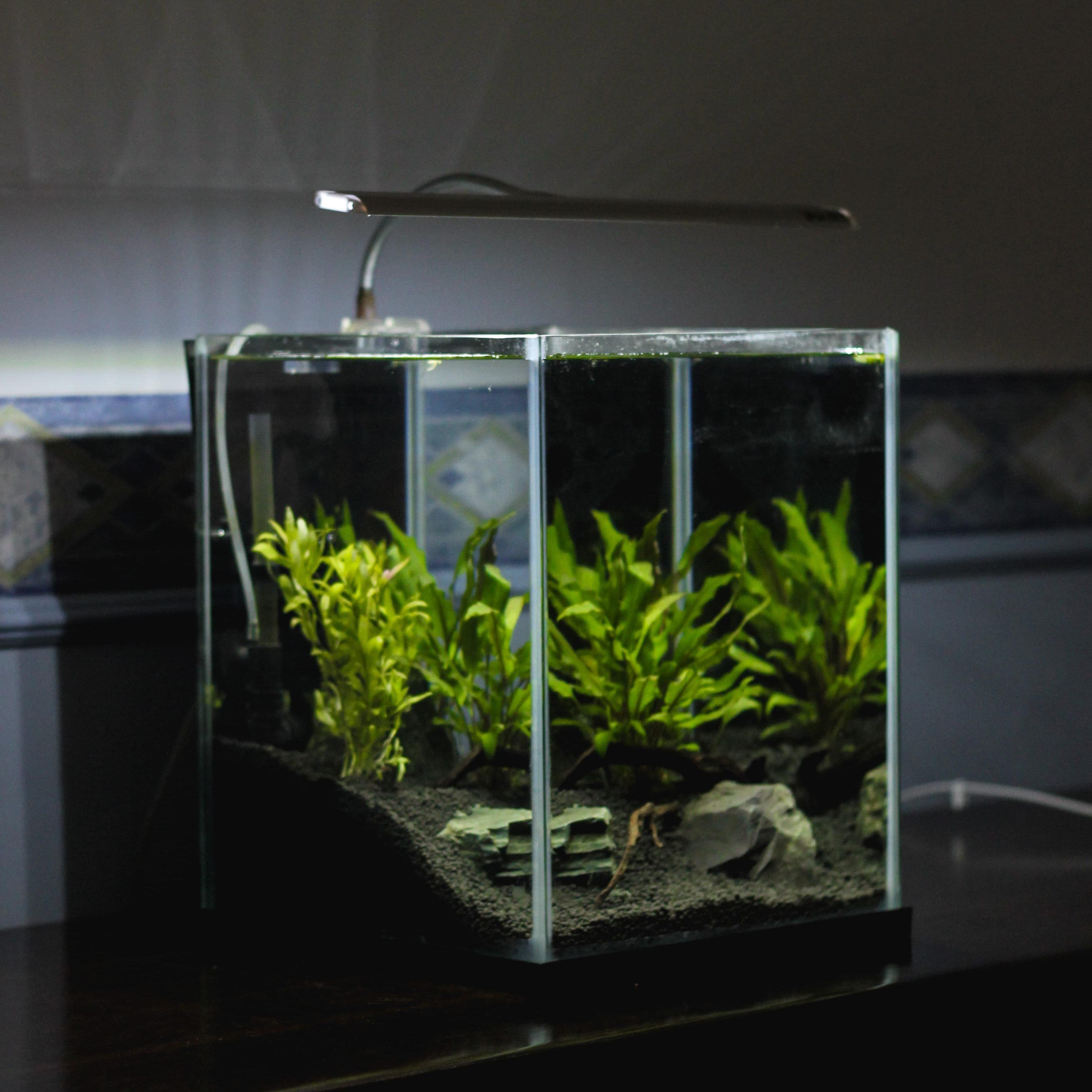 content aquaristik