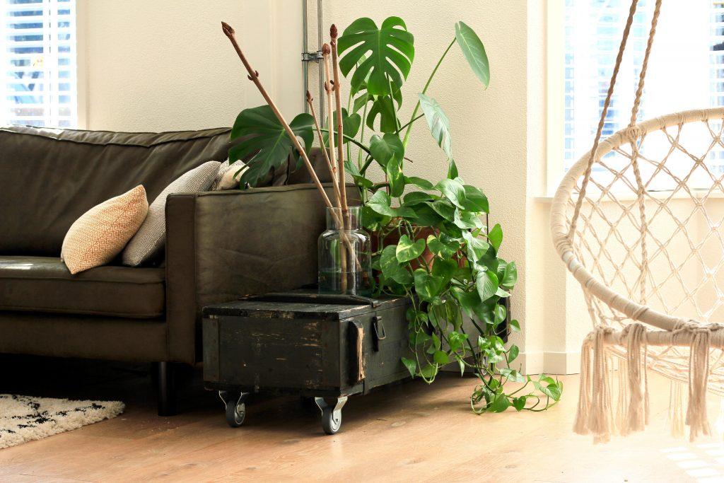 artikelbeschreibung sofa grün